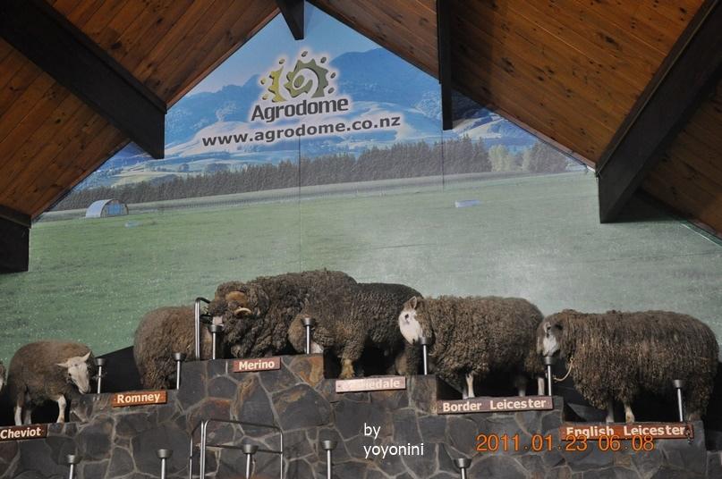 DSC_0743羊種類很多.JPG