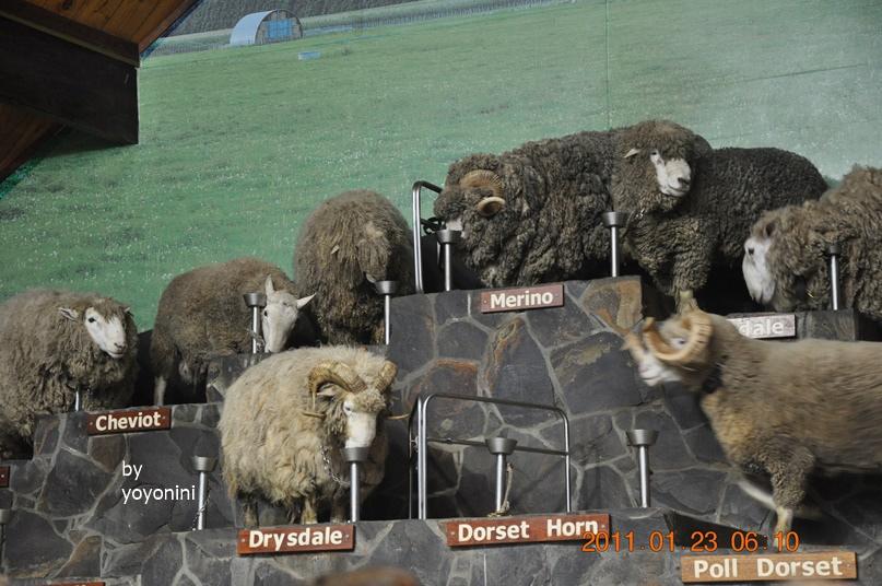 DSC_0744另一種羊種類.JPG
