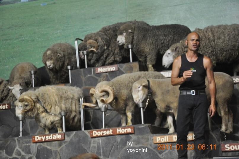 DSC_0745主持人在棉羊面前開場場白.JPG