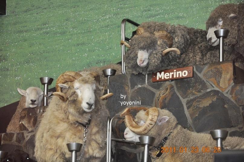 DSC_0766有一隻公棉羊很漂亮.JPG