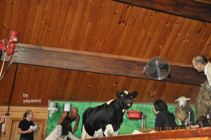 DSC_0768乘客上台看乳牛.JPG