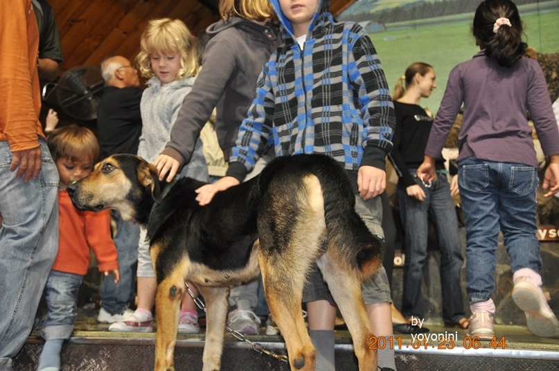 DSC_0783小朋友上台摸牧羊犬.JPG