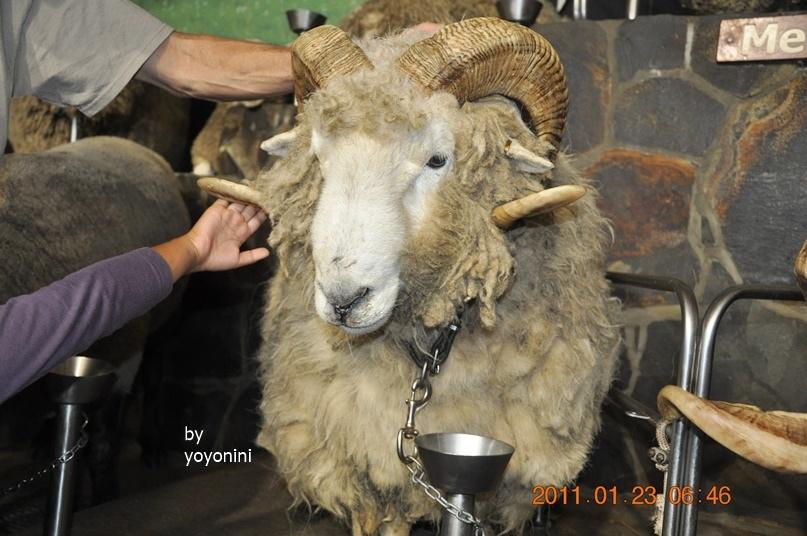 DSC_0787表演結束乘客觸摸棉羊.JPG