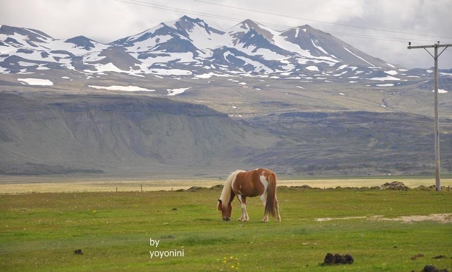 DSC_0138冰島馬三首圖.JPG