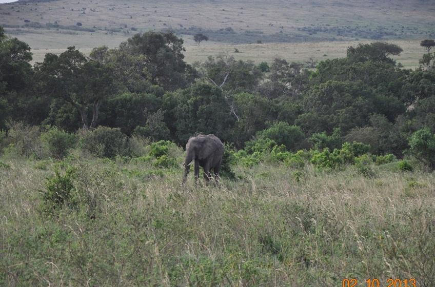 DSC_0350大象.JPG