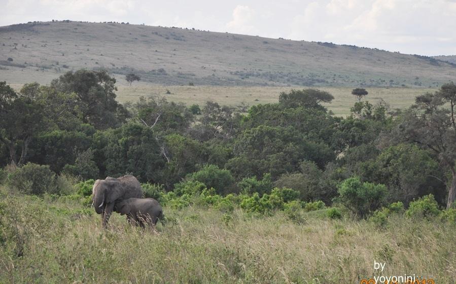 DSC_0356大象跟小象.JPG