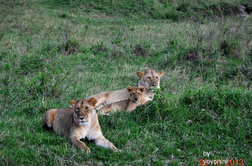 DSC_0374母獅與幼獅.JPG