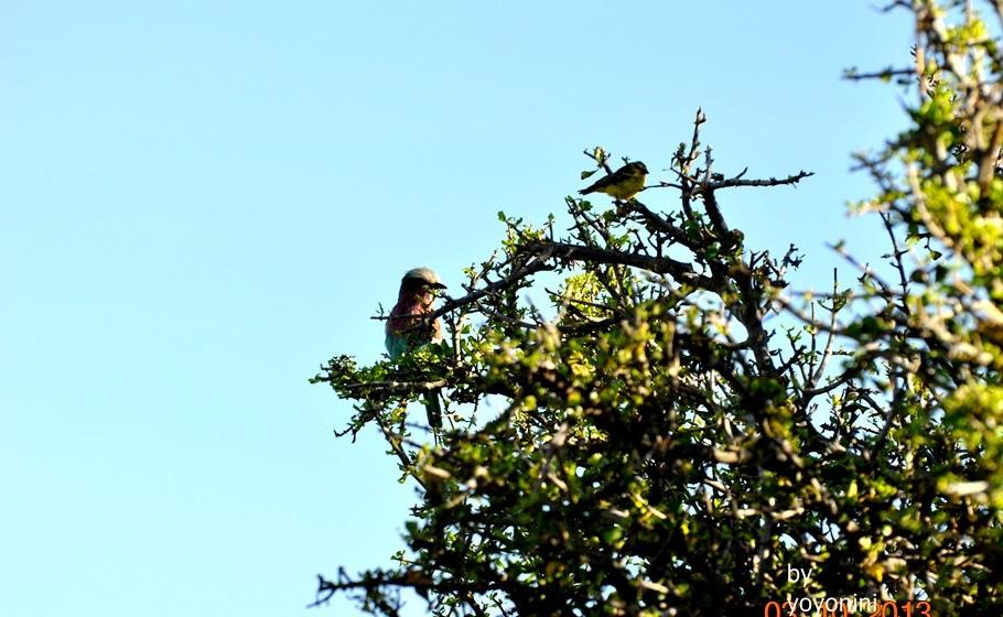 DSC_0492不知名鳥.JPG