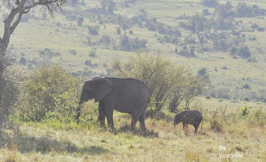 DSC_0660媽媽和小象.JPG