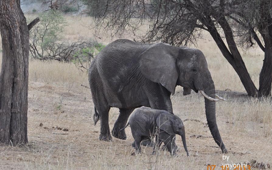 DSC_0088大象與小象.JPG
