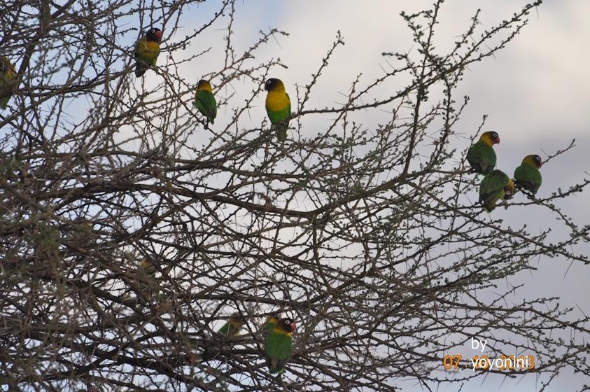 DSC_0128好多的鳥.JPG