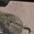DSC_0171年幼狒狒.JPG