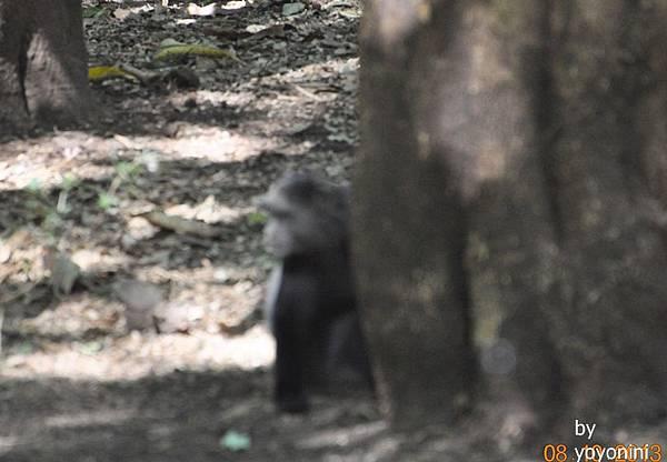 DSC_0198黑頭猴.JPG