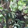 DSC_0199在樹上.JPG