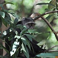 DSC_0201黑頭猴.JPG