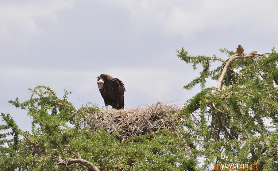DSC_0296不知名的鳥在築巢.JPG