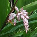 DSC_0360飯店外的花.JPG