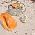 DSC_0378有人在撿貝殼.JPG