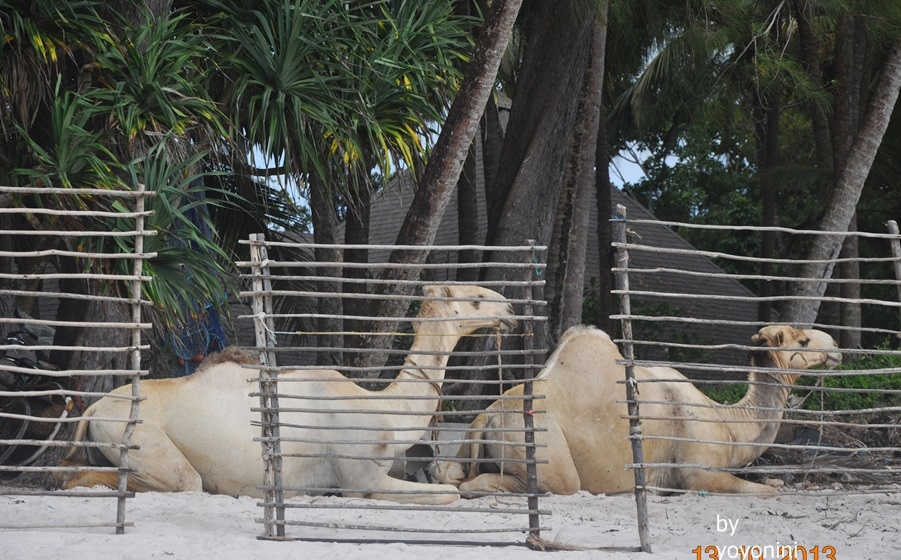 DSC_0387看到駱駝.JPG