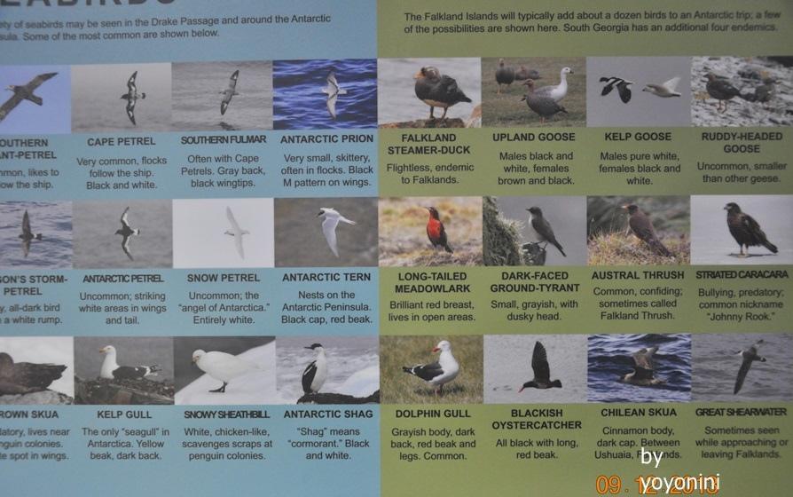 DSC_0540南極的鳥.JPG
