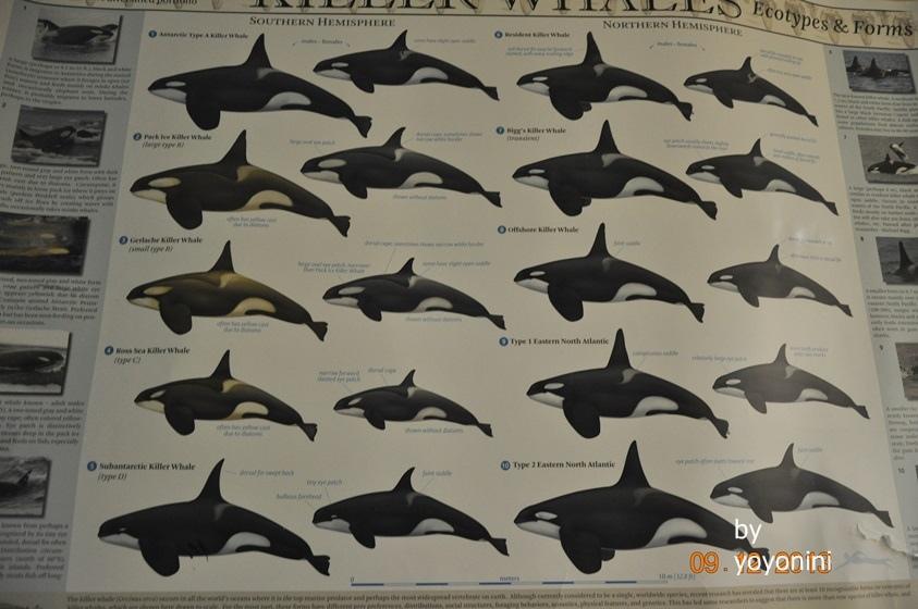 DSC_0538各種鯨魚圖片.JPG
