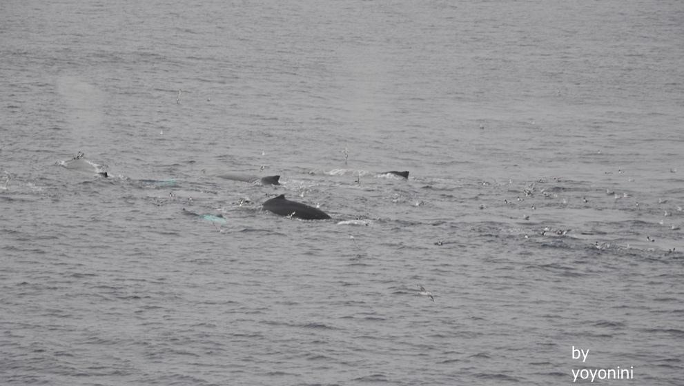 DSC_0578鯨魚噴氣及南極鳥.JPG