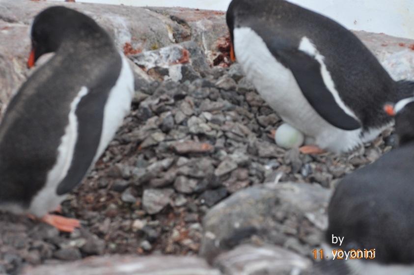 DSC_0844看到企鵝的蛋.JPG