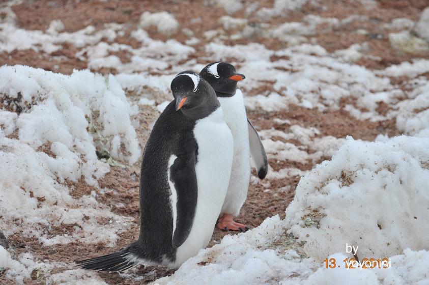 DSC_0161企鵝同伴.JPG
