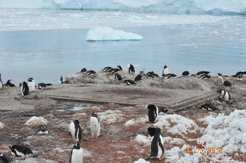 DSC_0200在冰山前企鵝中間有大石板.JPG