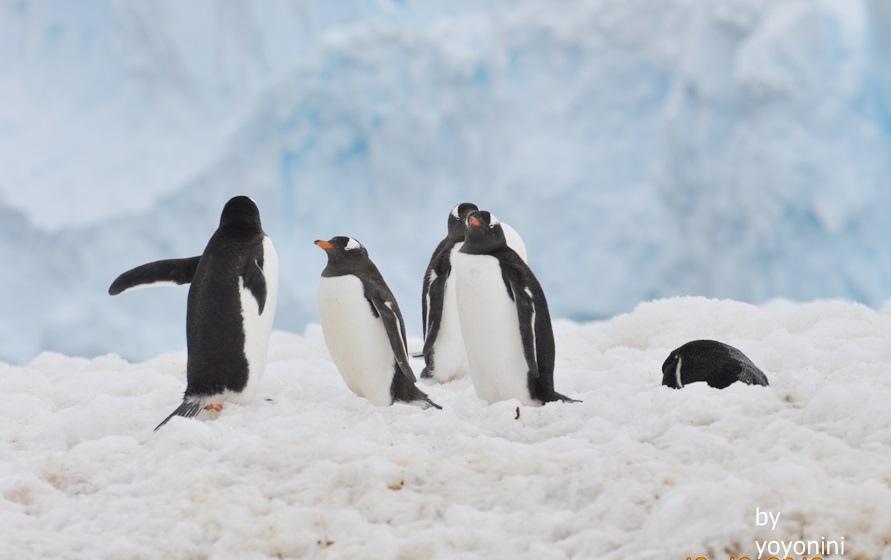 DSC_0266大冰山前企鵝.JPG