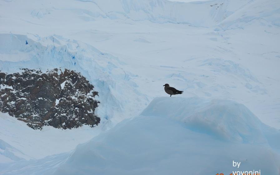 DSC_0297有一隻鳥在冰山上.JPG