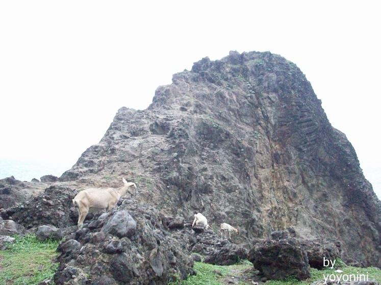 100_2427山羊跑到山頭.JPG