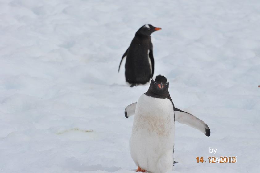 DSC_0327雪中企鵝.JPG