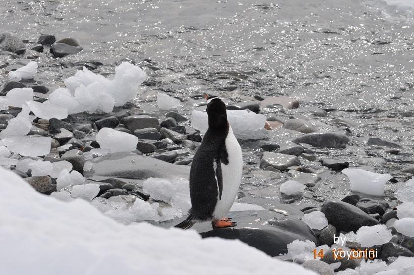 DSC_0396陽光照在浮冰上.JPG