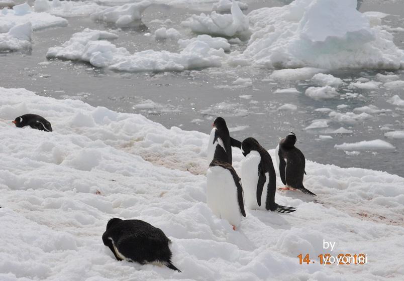 DSC_0453陽光照在南極海域及雪中.JPG