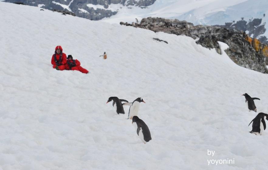 DSC_0565團員坐在冰上看企鵝.JPG