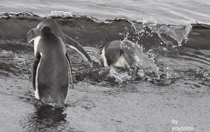 DSC_0170走向海裡游泳.JPG