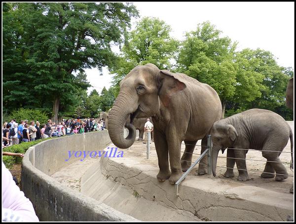 德國 漢堡 哈根貝克動物園 Tierpark Hagenbeck, Hamburg, Deutschland