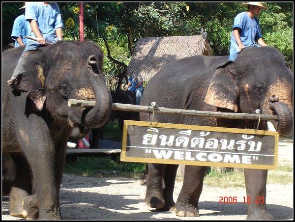 大象訓練學校