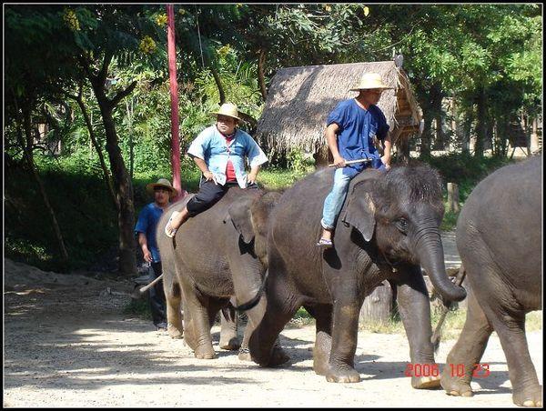 你猜,哪頭大象是我家小孩的最愛?