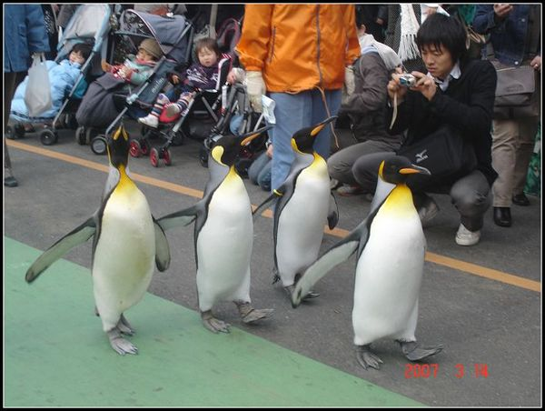 東京動物園