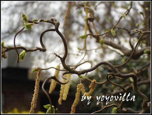 spring flowers 德國春天的花