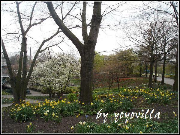 spring  flowers 德國春天