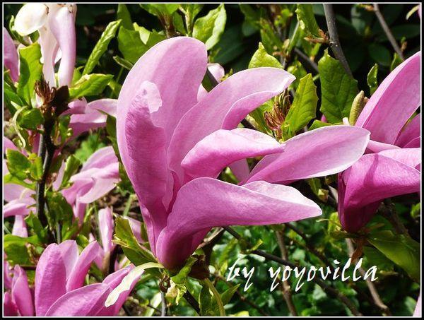 sping flowers德國的春天