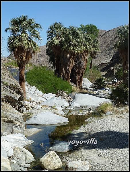 美國 加州 棕 櫚泉 印地安峽谷 峽谷部分 Indian Canyons, Palm Springs, CA, USA