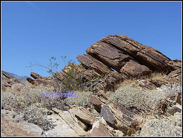美國 加州 印地安峽谷 山峽 Indian Canyons, CA, USA
