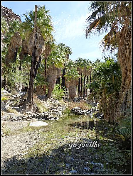 美國 加州 印地安峽谷  Indian Canyons, CA, USA