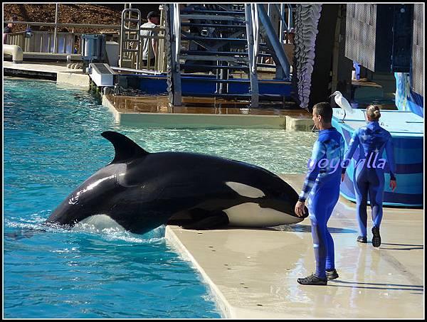 美國 加州 聖地牙哥 海洋公園 Ocean Park, San Diego, CA