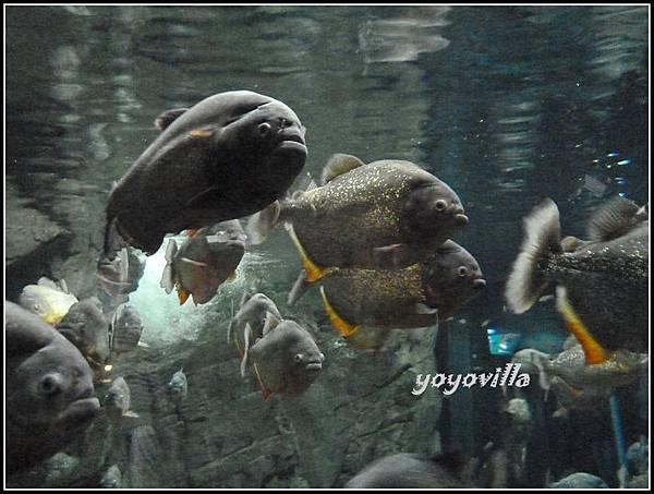 美國 加州 聖地牙哥 海洋公園 Sea World, San Diego, CA