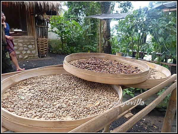 巴釐島 貓屎咖啡 civet coffee, Bali